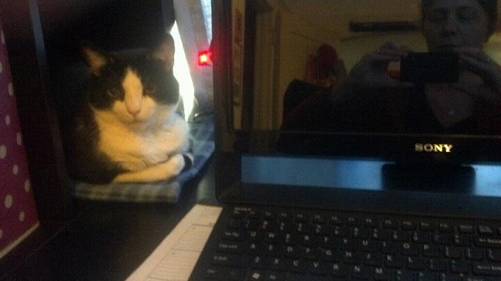 dooley cat desk